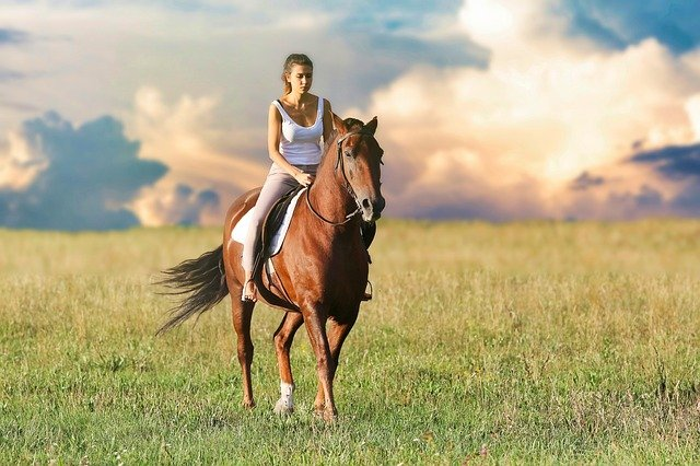 Important Things To Know About Caring For a Horse